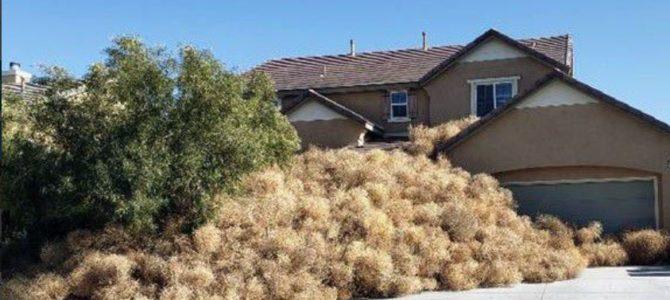 "Victorville CA: ""Tumbleweed"""